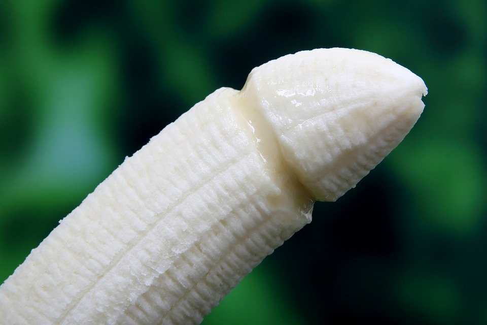 a penis
